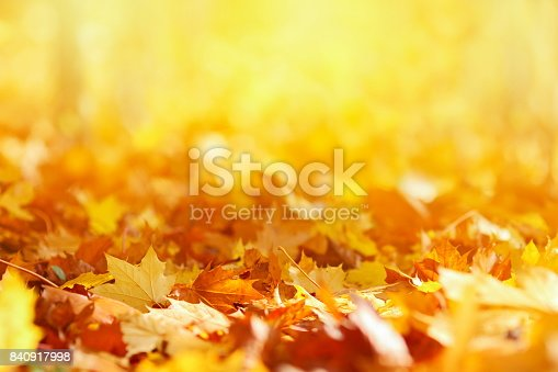 istock Autumn Leaves Background 840917998