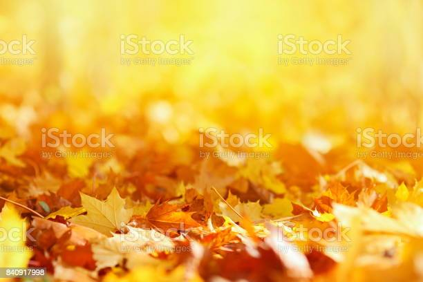 Autumn leaves background picture id840917998?b=1&k=6&m=840917998&s=612x612&h=v78qjl9fickcm4feybultnsmth sgg65xbltlfpc7j8=