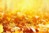 秋の葉のバックグラウンド