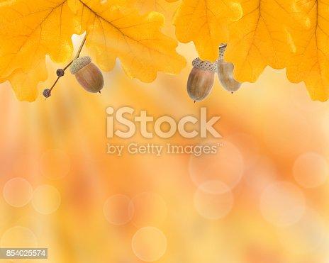 istock Autumn leaves, background 854025574