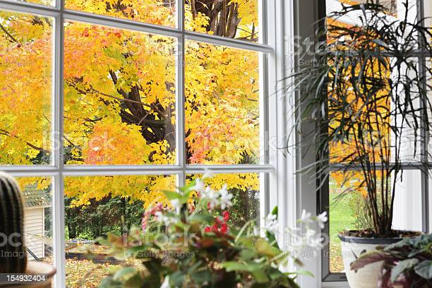 Photo of Autumn Leaves Beyond Bay Window Potted Plants