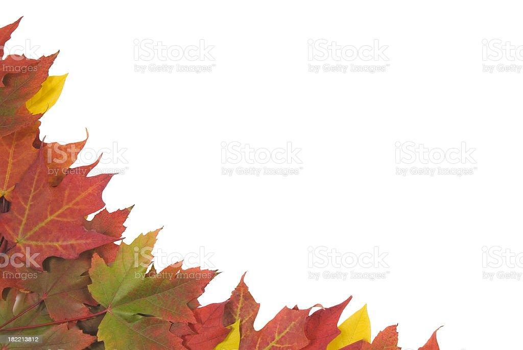 Autumn leaves border (isolated on white) - III royalty-free stock photo