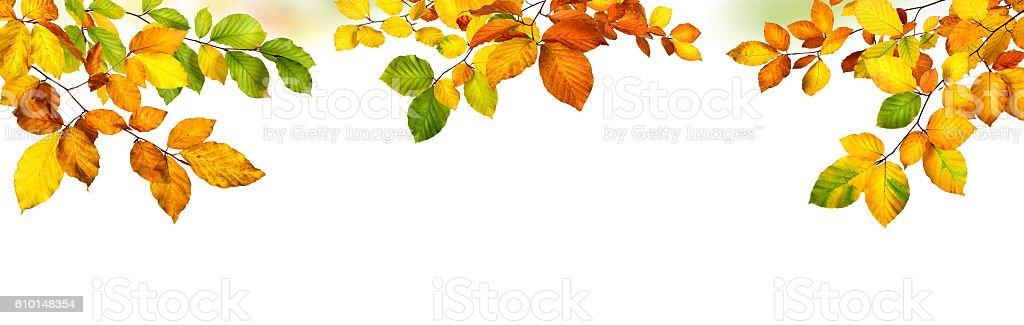 Autumn leaves border on white background stock photo
