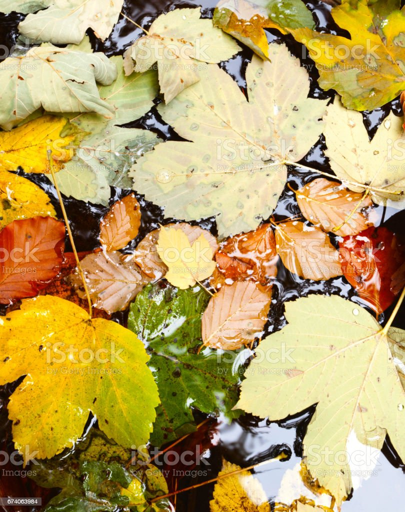 Autumn leaves by the river royalty-free stock photo