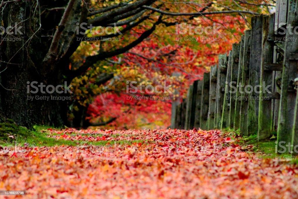 Autumn leaves carpet stock photo