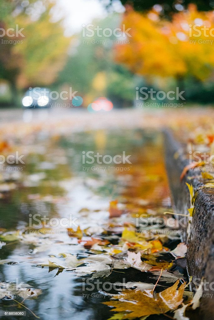 Autumn leaves close up during the rain stock photo