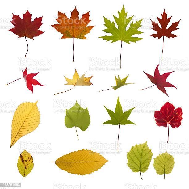 Photo of XXXL autumn leaves collection
