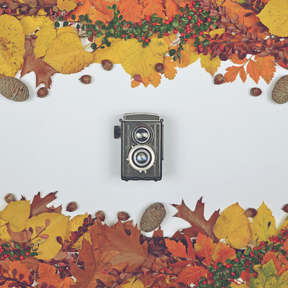 istock Autumn leaves cones and acorn on white background with vintage camera in center - Flat lay of Autumnal background 649768288