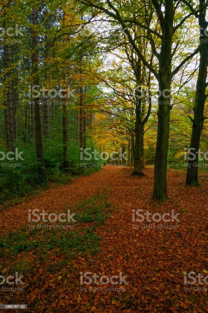 Autumn leaves covering the forest grounds stock photo