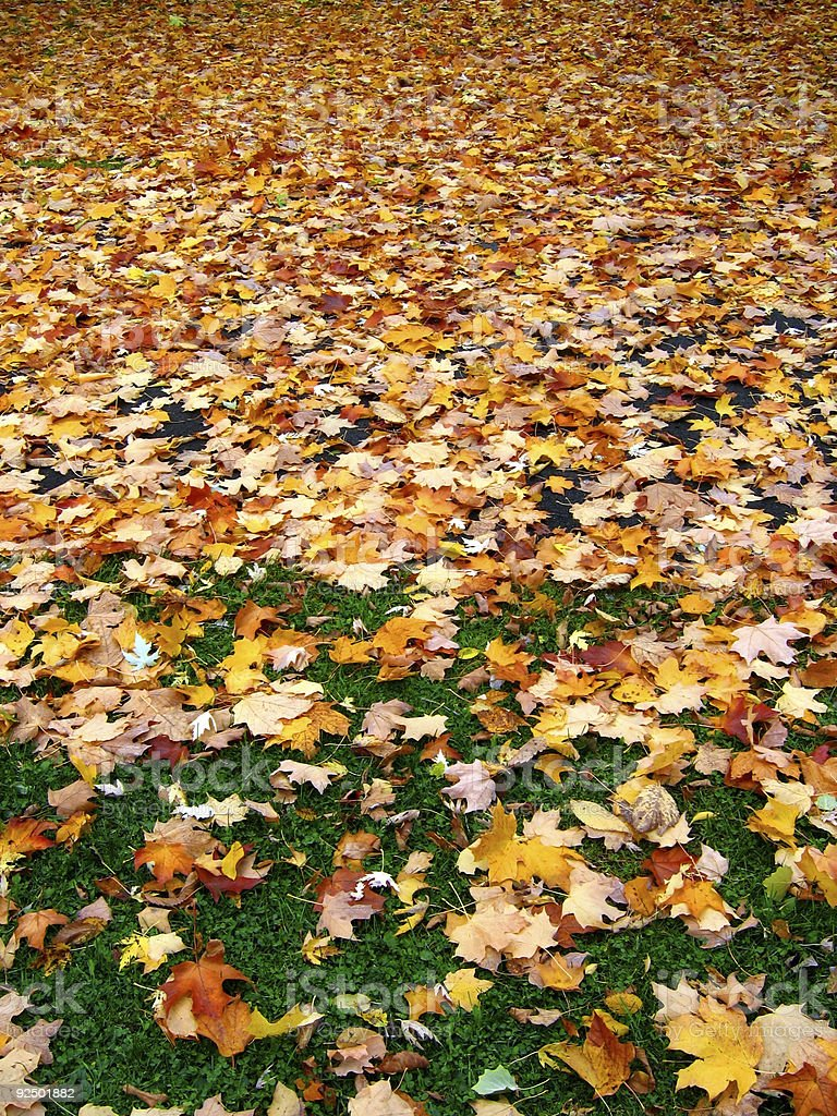 Autumn leaves fade royalty-free stock photo