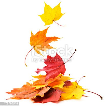 Autumn leaves fall on a pile of close-up on a white background. Isolated