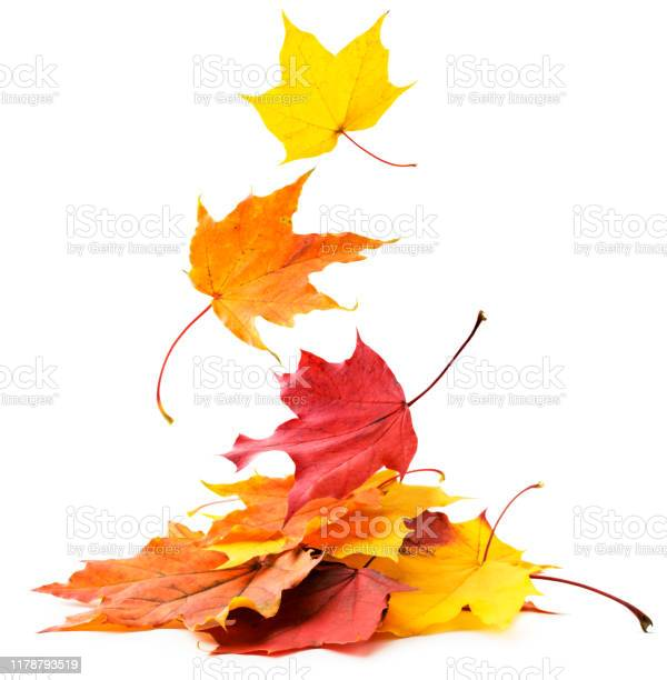Photo of Autumn leaves fall on a pile of close-up on a white. Isolated