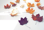Autumn leaves fall pattern and  sunny shadows on white background top view.