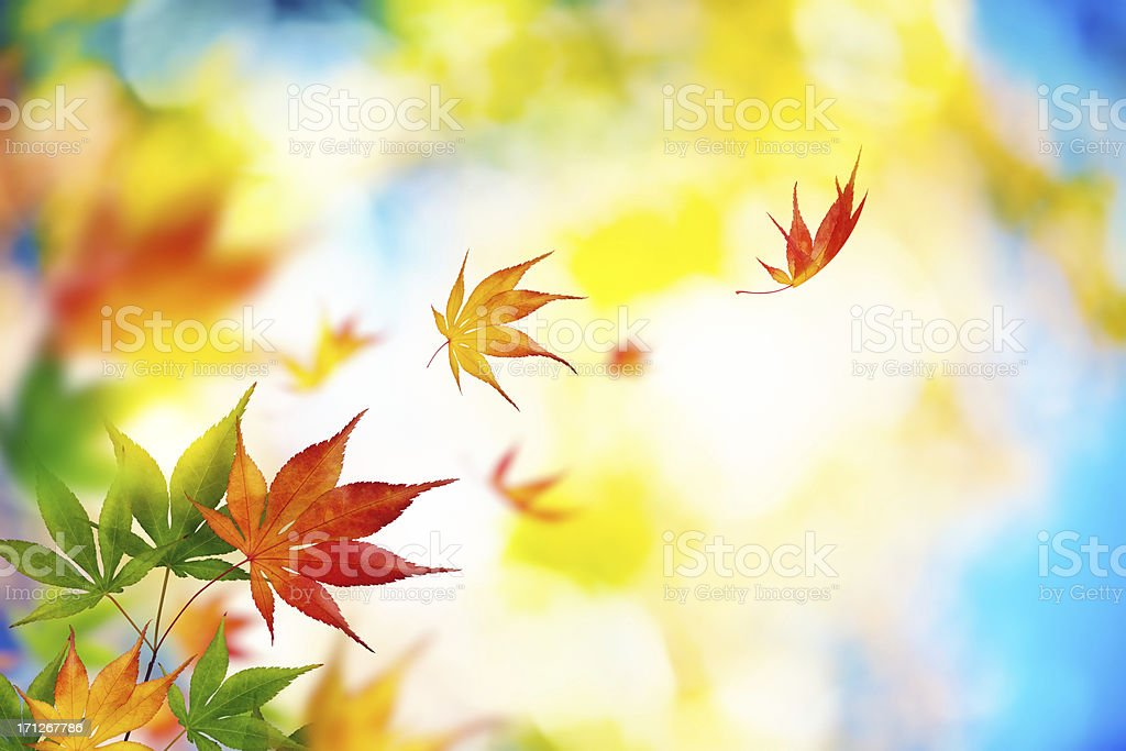 Autumn Leaves Falling From The Tree royalty-free stock photo