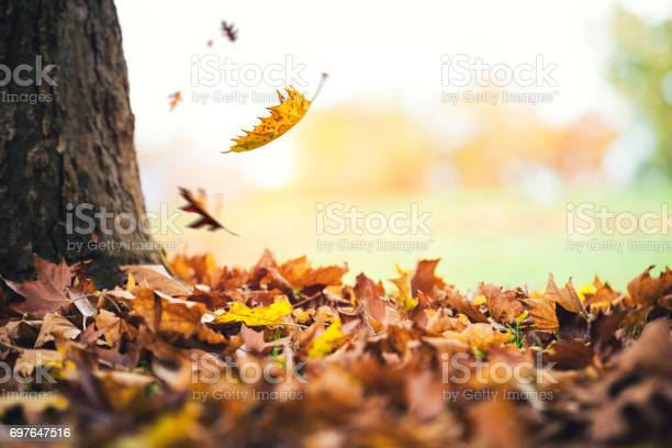Photo of Autumn Leaves Falling From The Tree