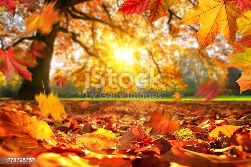 istock Autumn leaves falling on the ground in a park 1278765757