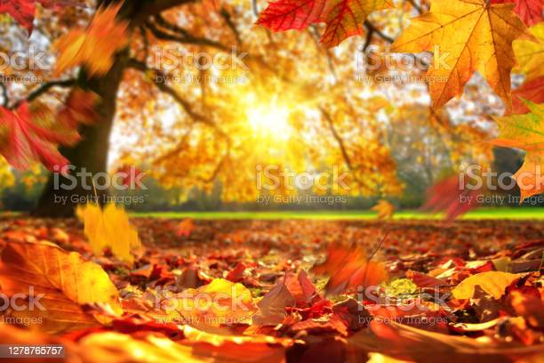 Photo of Autumn leaves falling on the ground in a park