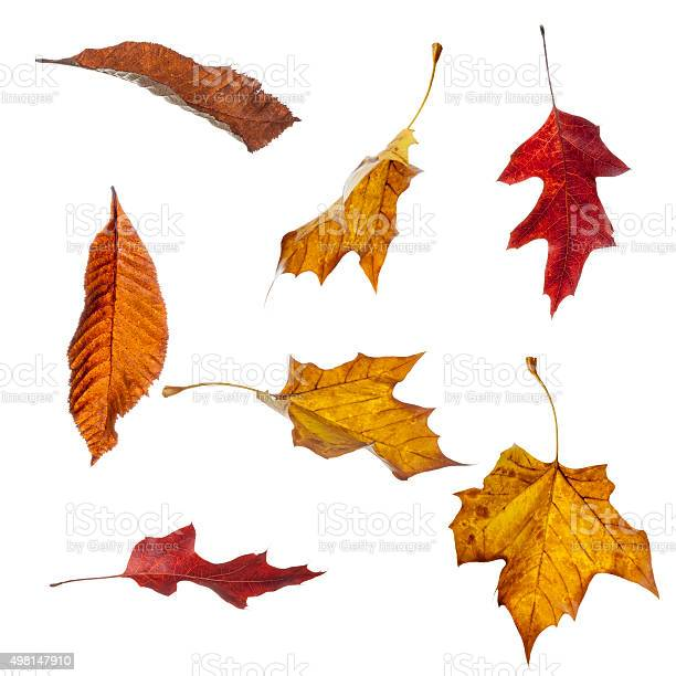 Autumn Leaves Falling Stock Photo - Download Image Now