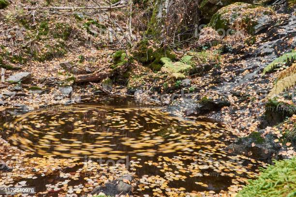 Autumn leaves float in the waters of the sestil del mallo stream in picture id1179540976?b=1&k=6&m=1179540976&s=612x612&h=o1 pgwnw hk0hj5rc405tciixlue52diurwyquhsui8=