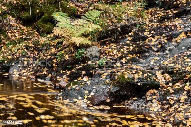 Autumn leaves float in the waters of the sestil del mallo stream in picture id1179541000?b=1&k=6&m=1179541000&s=612x612&h=7utrgil0xm2sw3lqp6lxurqnabnw9x8v5ttqwqlbod4=