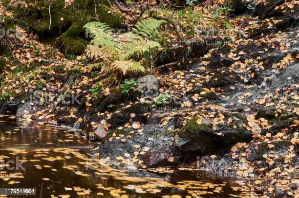 Autumn leaves float in the waters of the sestil del mallo stream in picture id1179541004?b=1&k=6&m=1179541004&s=612x612&h=6ry cczguoeabllni  soyr8oesm3rsdkkev3qs5wsc=
