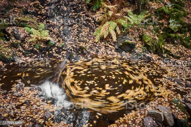 Autumn leaves float in the waters of the sestil del mallo stream in picture id1179541065?b=1&k=6&m=1179541065&s=612x612&h=6qtczliil8gdtyx ld2gvvj5vxaxjmv7tg7cffkmx0u=