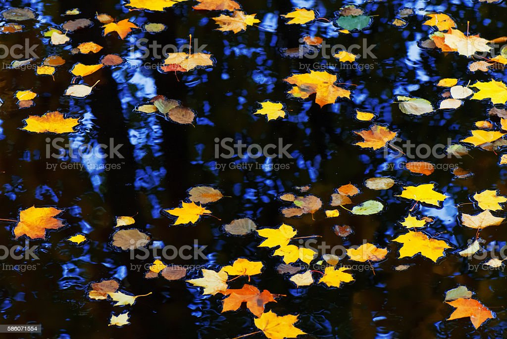 Autumn leaves floating on water stock photo