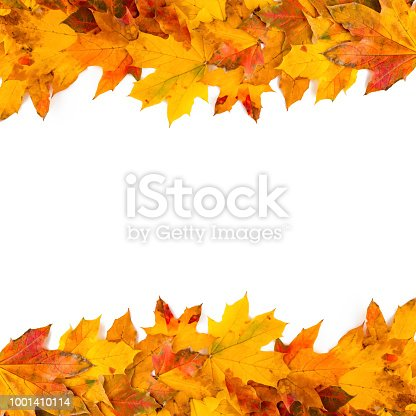 Autumn leaves frame nature background
