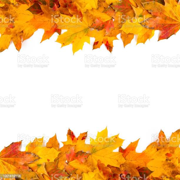 Autumn leaves frame nature background picture id1001410114?b=1&k=6&m=1001410114&s=612x612&h=uoknuf844yu7lusxjsasty5d6z3nwut0h6ihdojryhs=