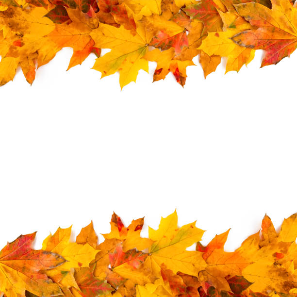 Autumn leaves frame nature background stock photo