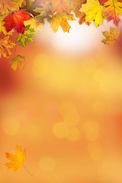 秋葉框架 - 垂直構圖 個照片及圖片檔