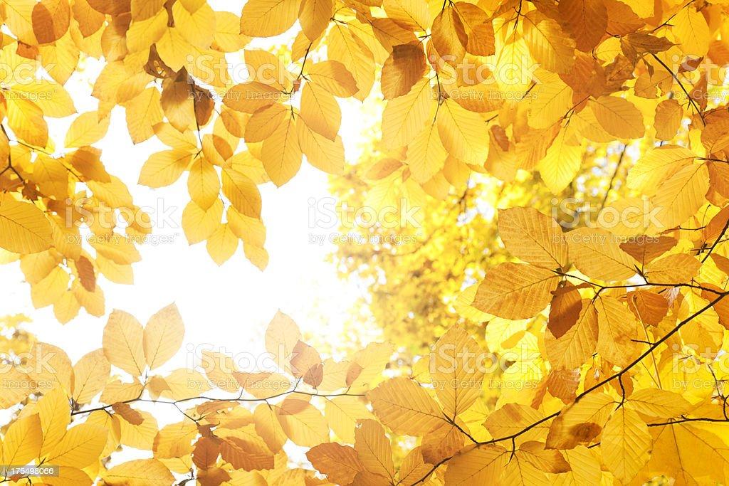 Autumn leaves frame royalty-free stock photo