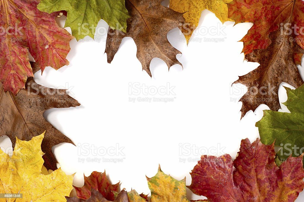 Autumn Leaves Frame royalty free stockfoto