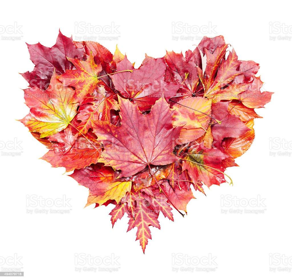 Herbst Blätter Herz – Foto