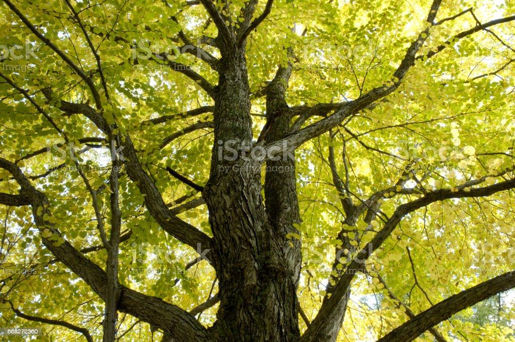 Autumn leaves Hiroki foto stock royalty-free