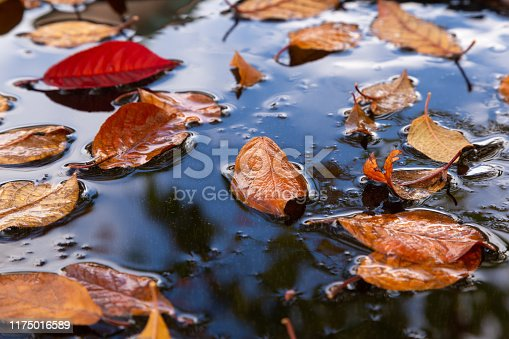 Yellow autumn leaves in a frozen puddle with a reflection of the blue sky