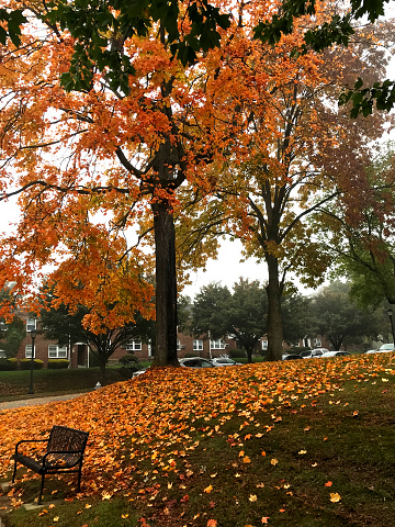 Amsterdam, Netherlands - August 22nd 2019\n\nThree women sat on bench sheltering under enormous big tree in city centre during autumn with beautiful orange fall colours and lots of leaves on the ground