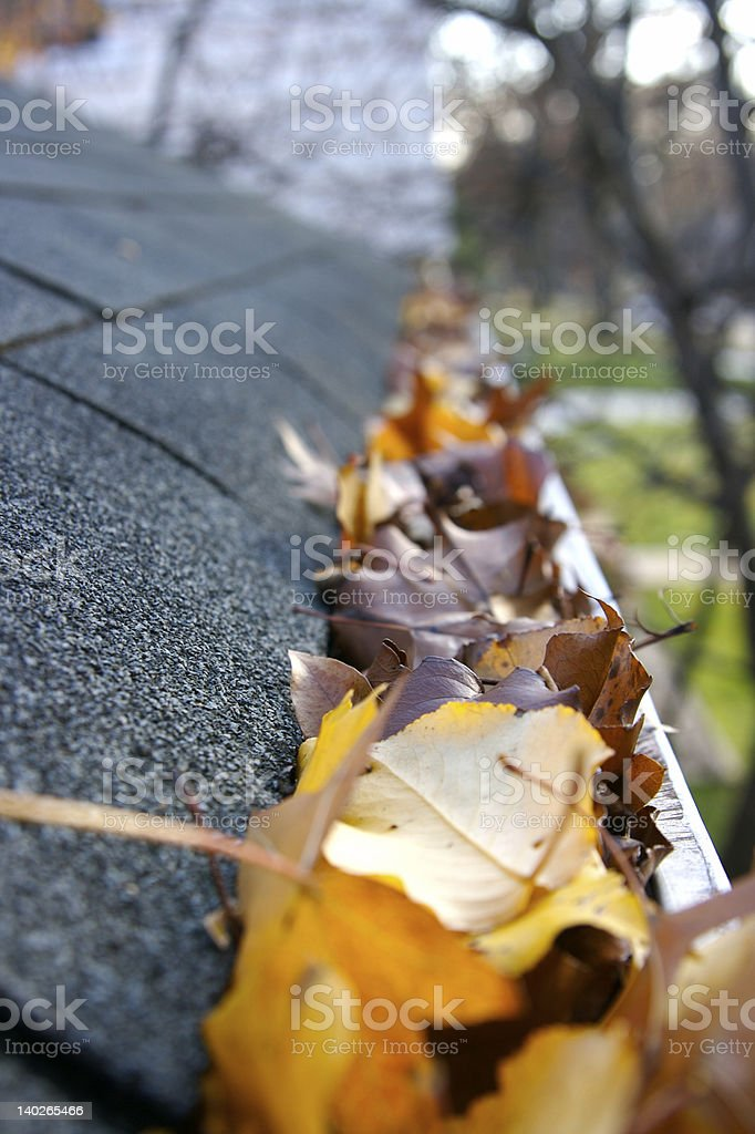 Autumn leaves in a roof gutter stock photo
