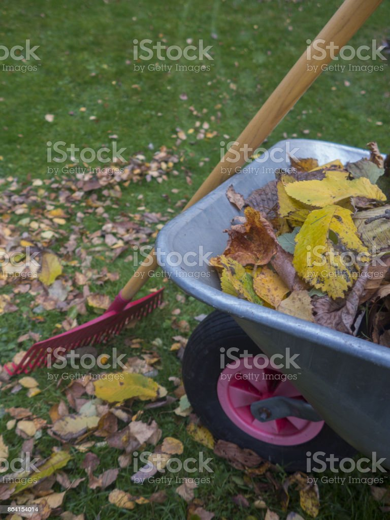 autumn leaves in a wheelbarrow royalty-free stock photo