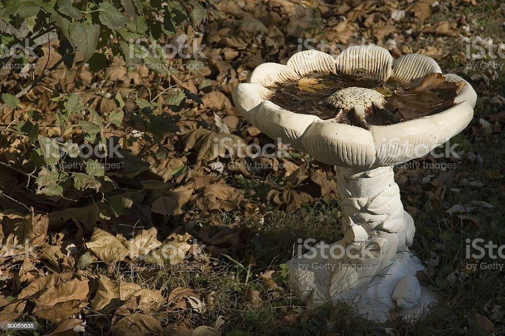 Autumn Leaves in Birdbath stock photo