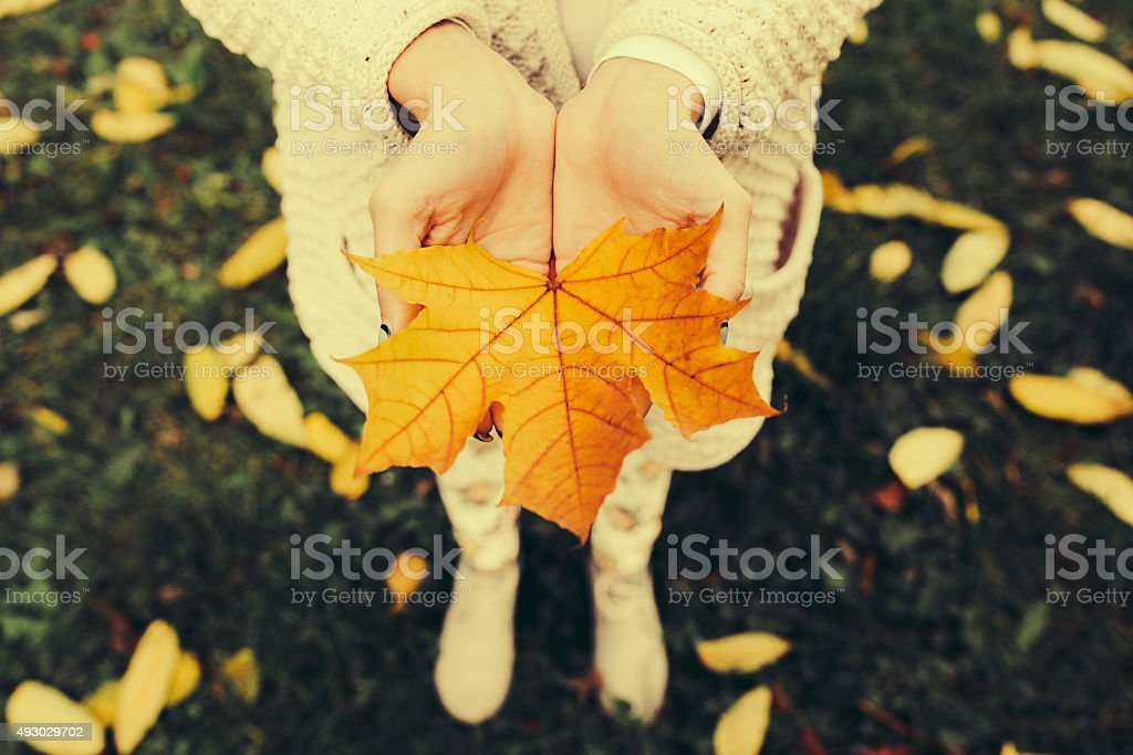 Autumn leaves in girl hands stock photo
