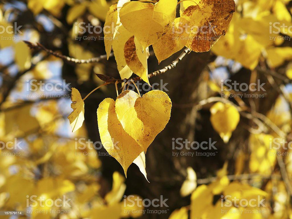 autumn leaves in heart shape royalty-free stock photo