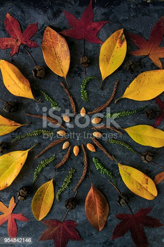 istock Autumn leaves in mandala shape flat lay on dark background. Botanic natural meditative technic for calm down 954842146