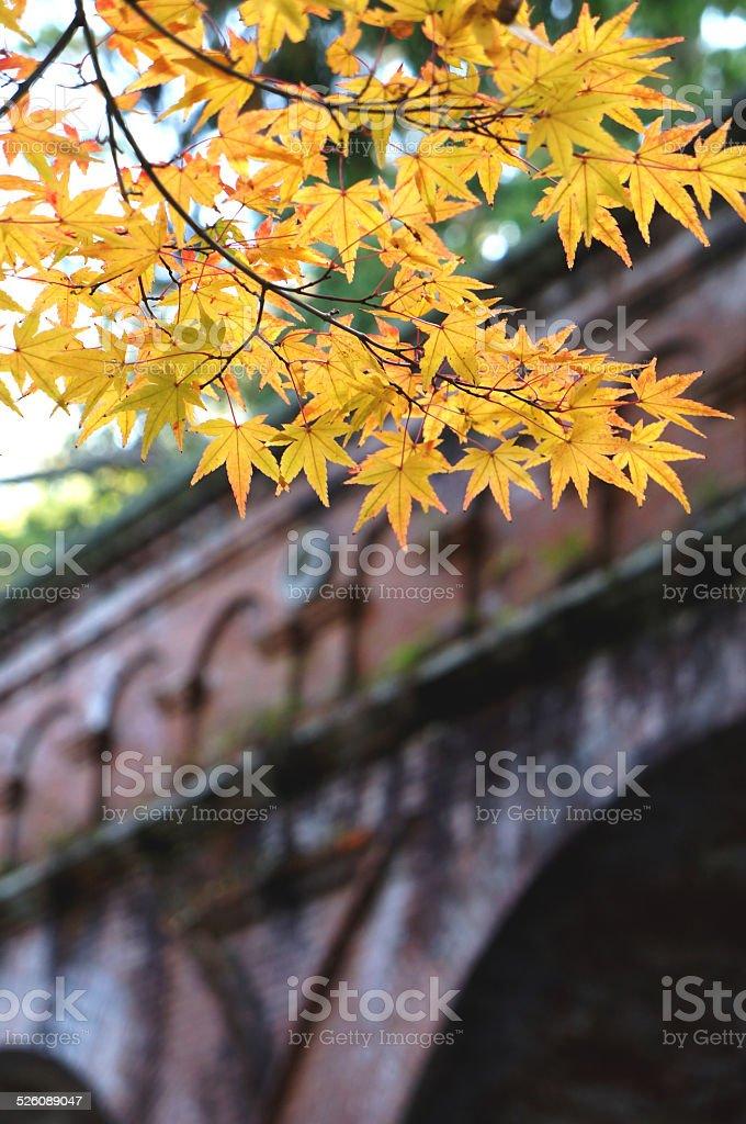 Autunno foglie nel Tempio di Nanzenji, Kyoto - foto stock