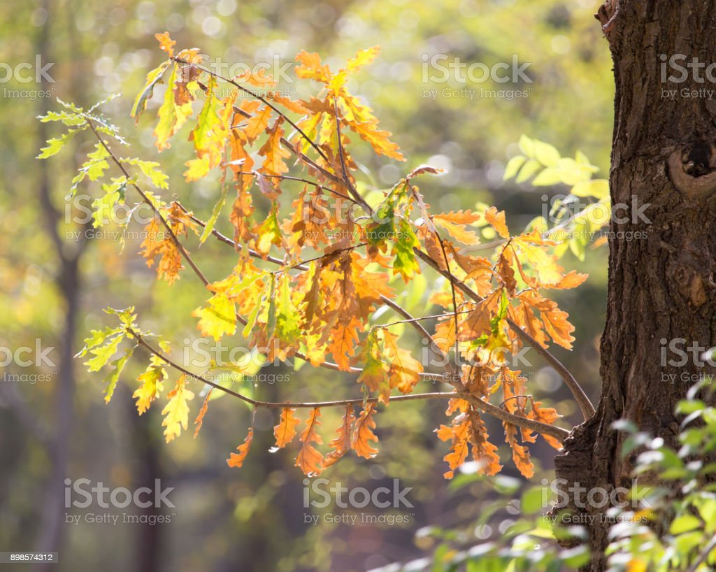 autumn leaves in nature stock photo