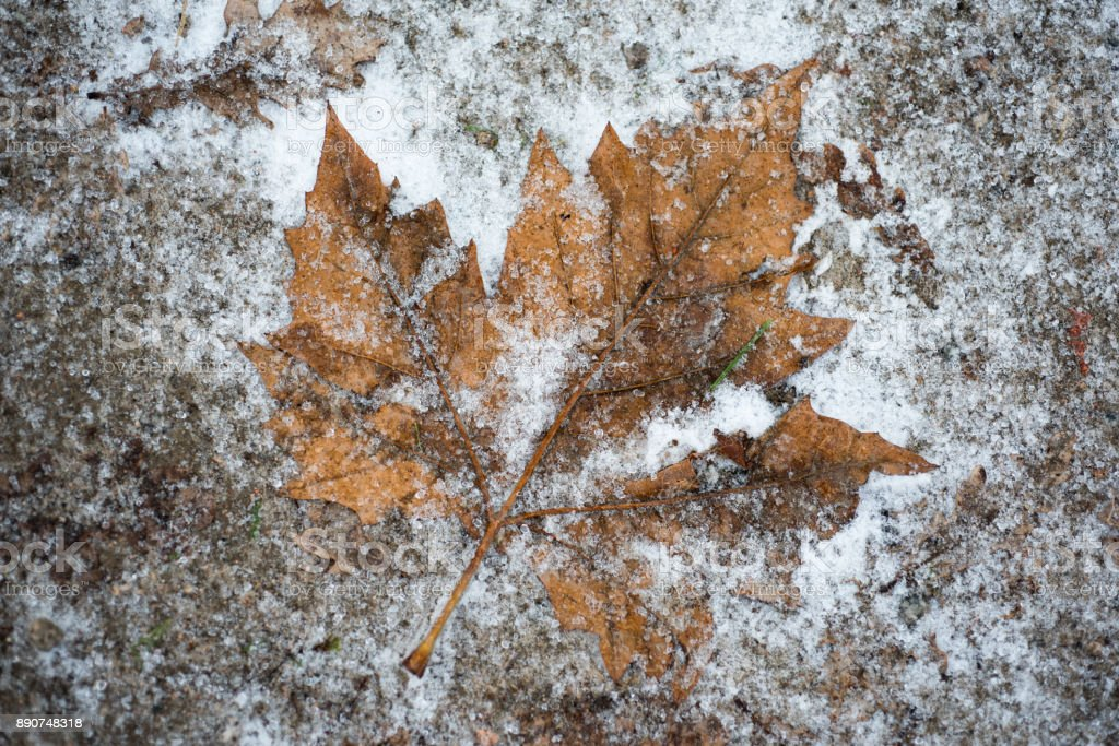 autumn leaves in snow stock photo