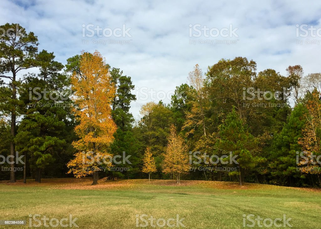Autumn leaves in Texas stock photo