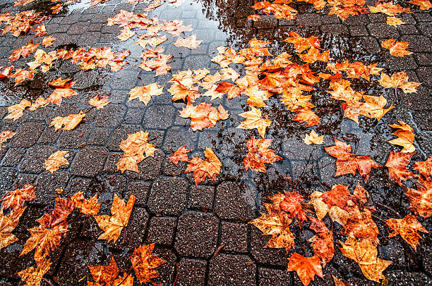 Autumn Leaves in The City After Rain stock photo
