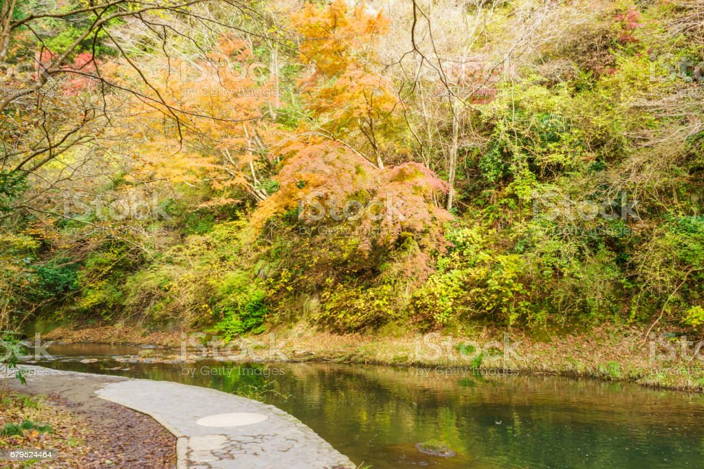 Autumn leaves in the Yoro valley, Chiba royalty-free stock photo