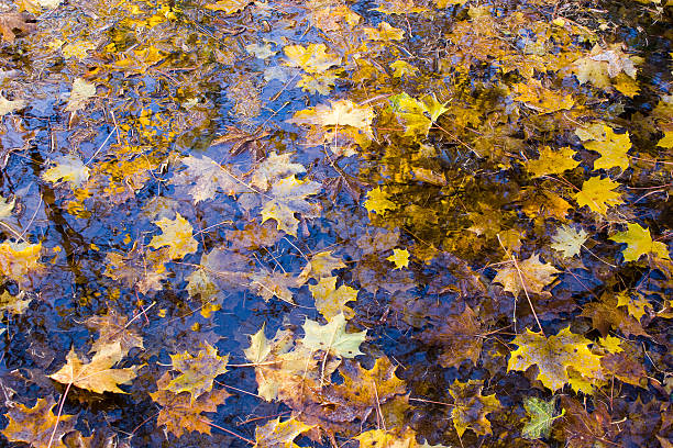 Autumn leaves in water stock photo